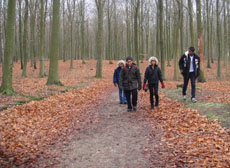 The Maldivian delegates explore a forest in Denmark