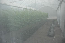 Misty inside the greenhouse