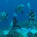 'Dolphin Lagoon' to offer conservation, education, recreation