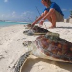 Against the current – Turtle conservation in the Maldives