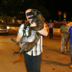 First batch of Faaragema dogs arrive in Maldives