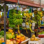Authorities warn of imminent fruit fly epidemic