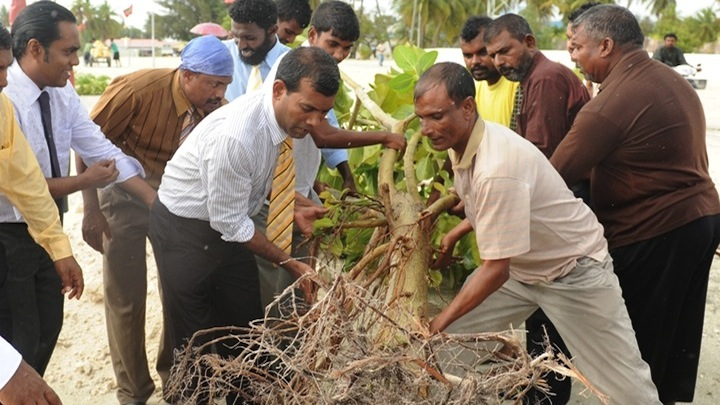 State company uproots tree planted by ex-president Nasheed