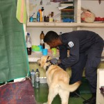 Sniffer dogs locate drugs at Maafushi jail